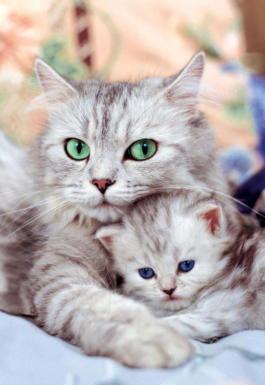 Puzzle Cica kiscicával Educa 500 db 11 évtől