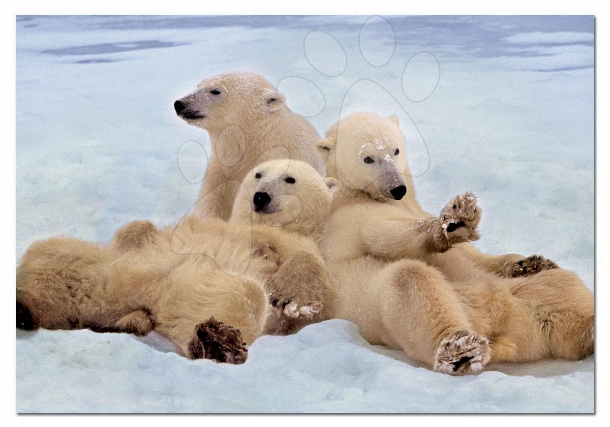 Educa Puzzle Rodinka ľadových medveďov 500 dielov 14434 farebné