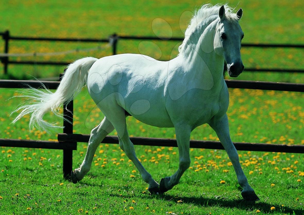Puzzle Biely kôň Educa 500 dielov od 11 rokov