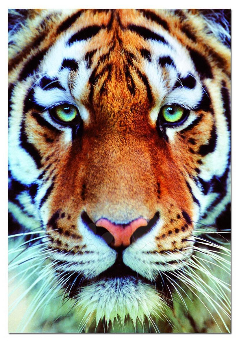 Puzzle Tvár tigra Educa 1000 dielov s lepidlom