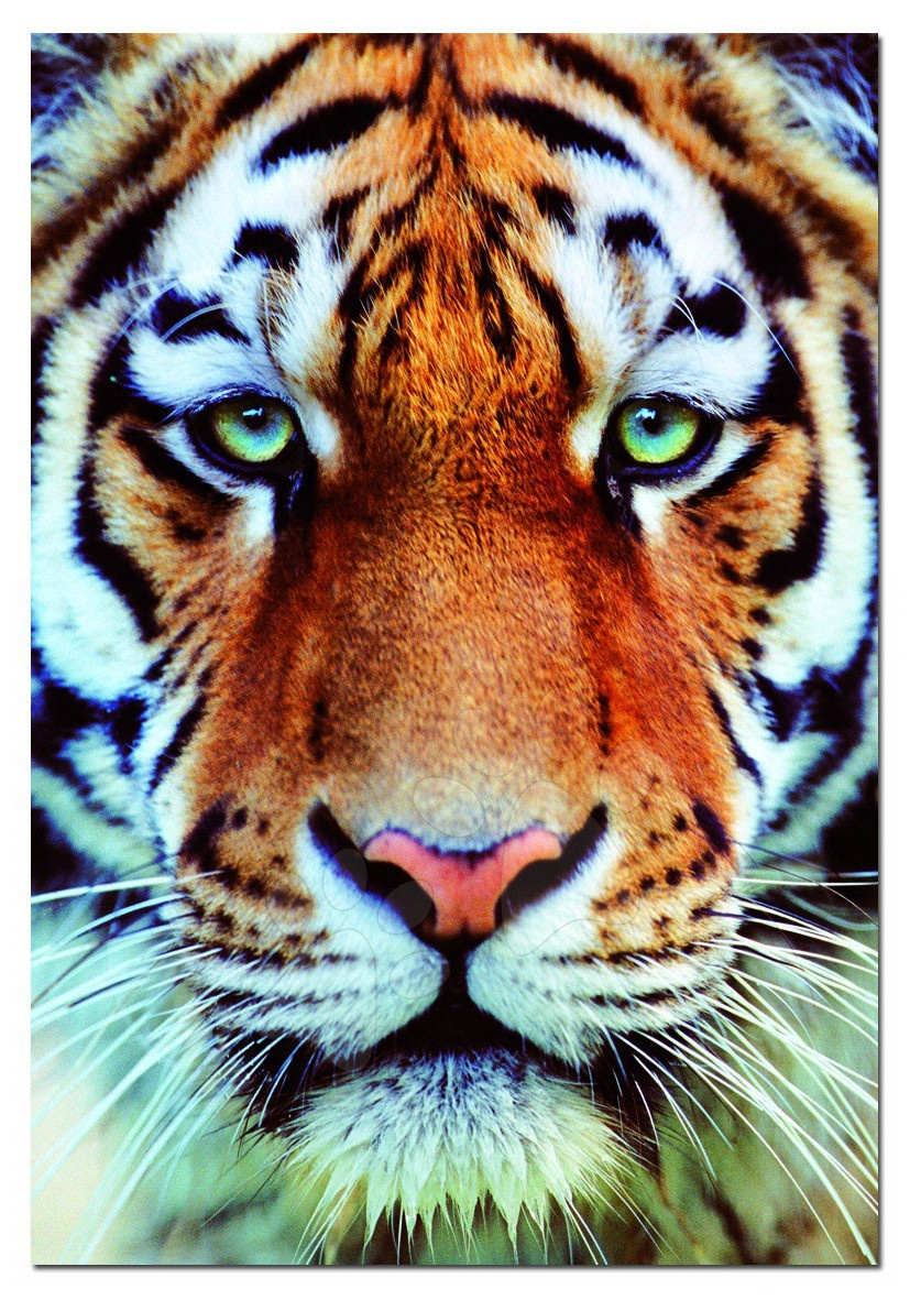 Puzzle Genuine, Tygři Educa 1000 dílků a FIX PUZZLE LEPIDLO