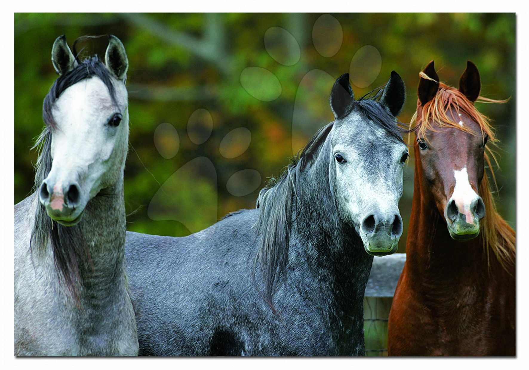 Puzzle Genuine 1000 dielov, Arabian Horses Educa 1000 dielov a lepidlo