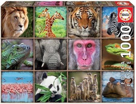 17656 b educa puzzle 1000