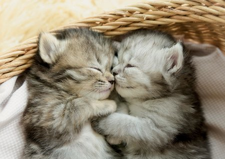 Puzzle 500 dílků - Puzzle Sweet Kittens Educa 500 dílků a Fix lepidlo v balení od 11 let_1