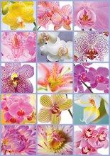 Puzzle 1500 dielne - Puzzle Genuine Koláž kvetov Educa 1500 dielov_0