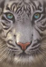 Puzzle 500 dielne - Puzzle Genuine Biely tiger Educa 500 dielov od 11 rokov_0