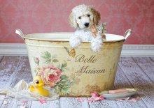 Puzzle Genuine Belle Maison, Lisa Jane Educa 500 dielov od 11 rokov