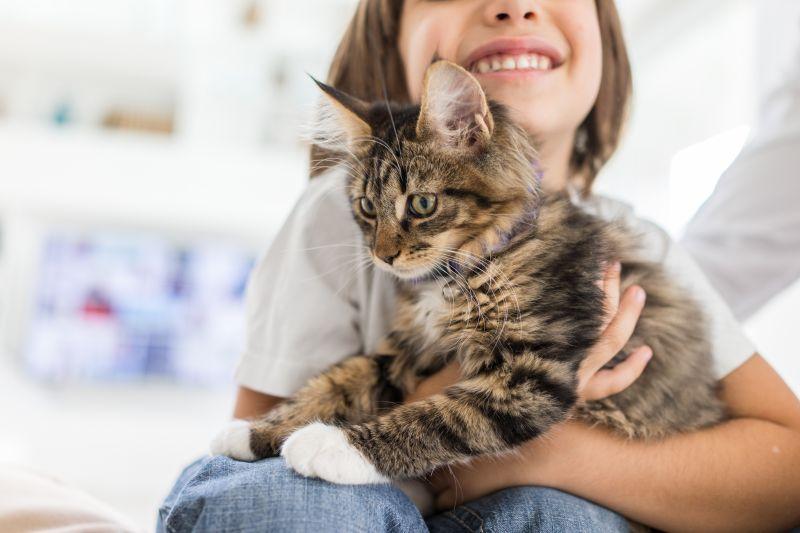 Deti a mačky