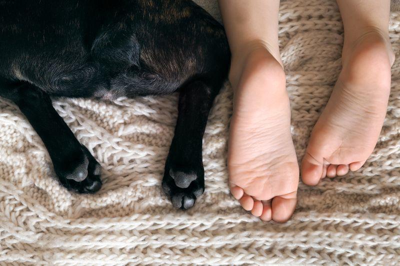 Domáce zvieratá a alergie